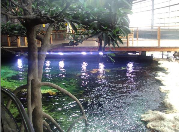 Nausicaa musée océanographique de Boulogne sur mer Lagon10