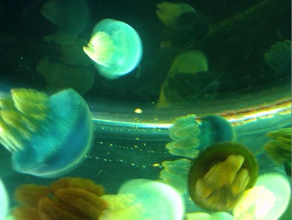 Nausicaa musée océanographique de Boulogne sur mer Meduse10