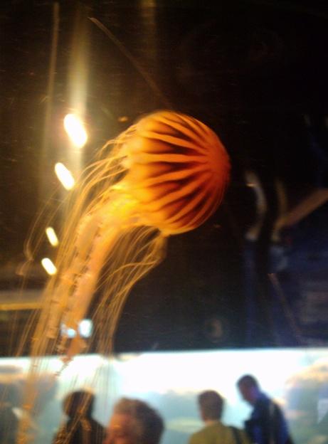 Nausicaa musée océanographique de Boulogne sur mer Meduse12