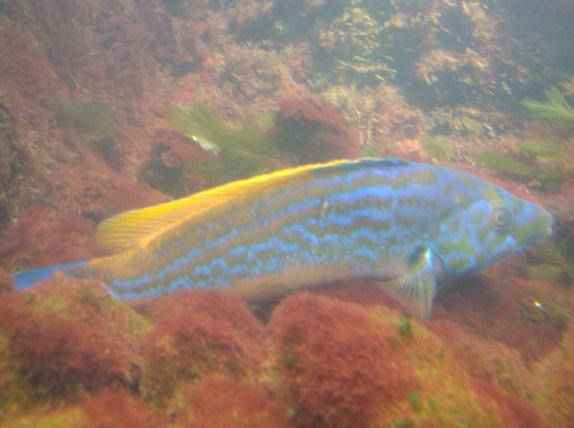 Nausicaa musée océanographique de Boulogne sur mer Poisso10