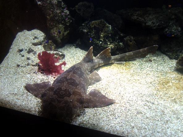 Nausicaa musée océanographique de Boulogne sur mer Poisso12