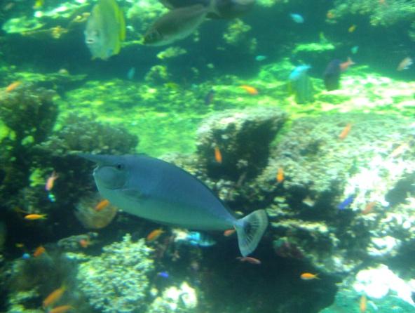 Nausicaa musée océanographique de Boulogne sur mer Poisso15
