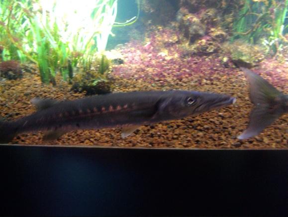 Nausicaa musée océanographique de Boulogne sur mer Poisso17