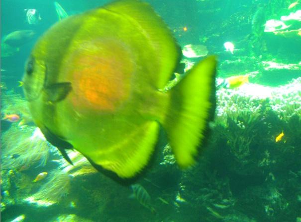 Nausicaa musée océanographique de Boulogne sur mer Poisso19