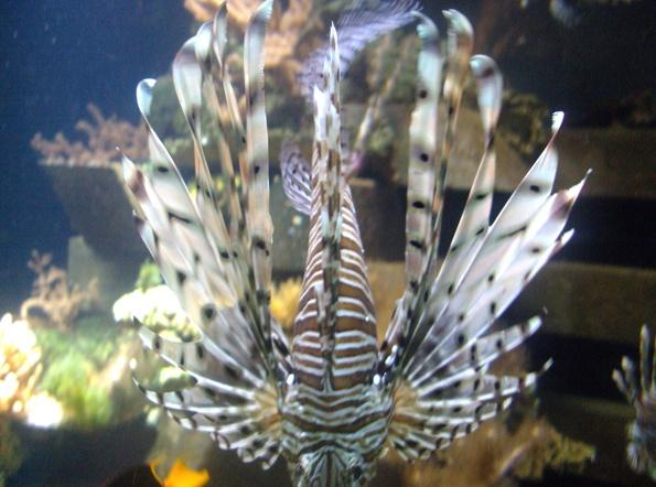 Nausicaa musée océanographique de Boulogne sur mer Rascas10