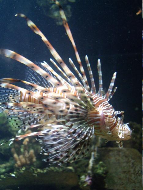 Nausicaa musée océanographique de Boulogne sur mer Rascas11