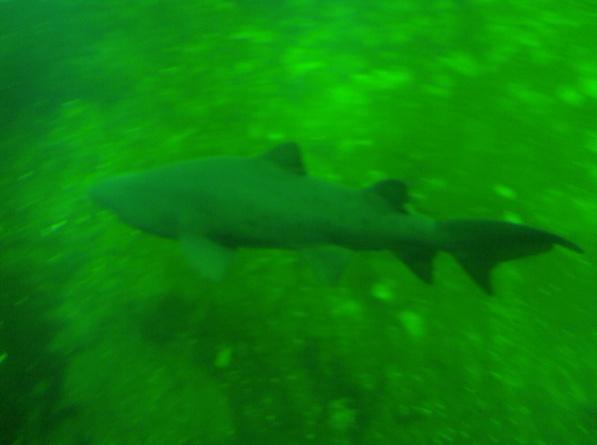 Nausicaa musée océanographique de Boulogne sur mer Requin10