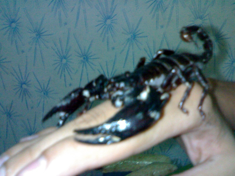 do you know what my scorpion is?? 04092011