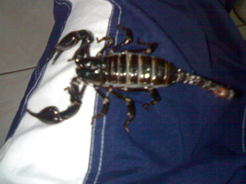 do you know what my scorpion is?? 04092015