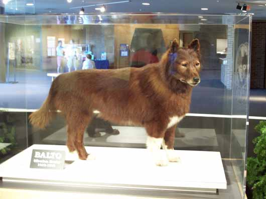 Check it out it really is Balto The_re10