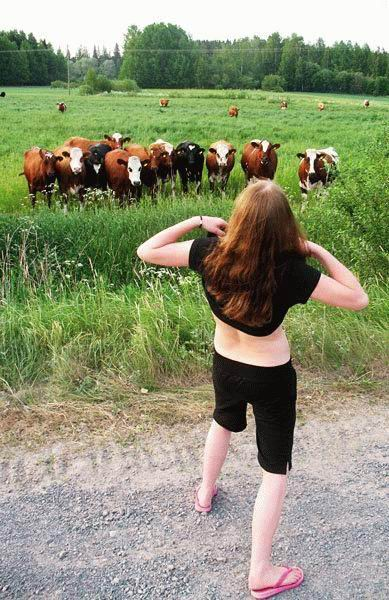 Apa yang menyebabkan penyakit lembu gila? Cowfla10