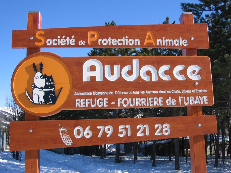 AUDACCE  - 04400 BARCELONETTE Animau14