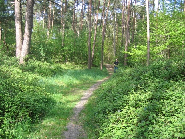 [MAP: LA FORET CENTRAL][FLEURINES] Img_6123