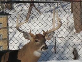 Photos d'un beau buck 710