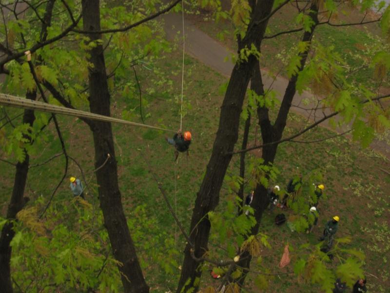 Climbing trees Ziplin10
