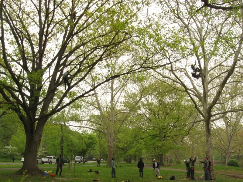 Climbing trees Ziplin11