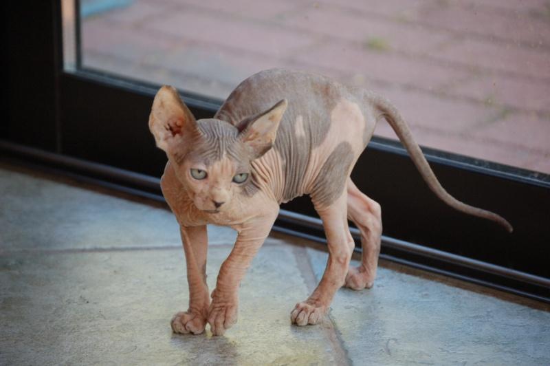 1 er Thème : Quand votre/vos chats étaient chatons Dsc_0011