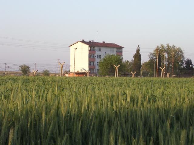 صورة من كوباني 21_4_210