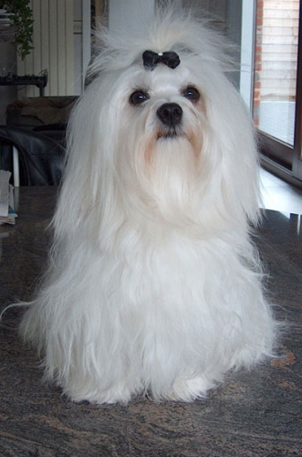Psi i psići (kinologija, pasmine pasa, obuka pasa, dresura pasa, lovački psi, kućni psi, hranidba pasa, slike pasa, Vaša najdraža pasmina pasa, izložbe pasa, šetanje pasa, kupanje pasa, perilica za pse, hrana za pse) - Page 4 25042011