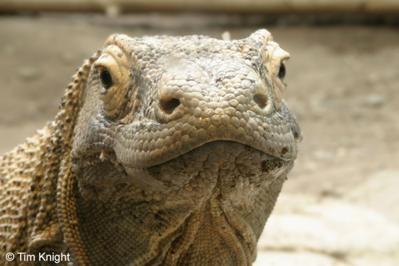 twins - separated at birth? Komodo10