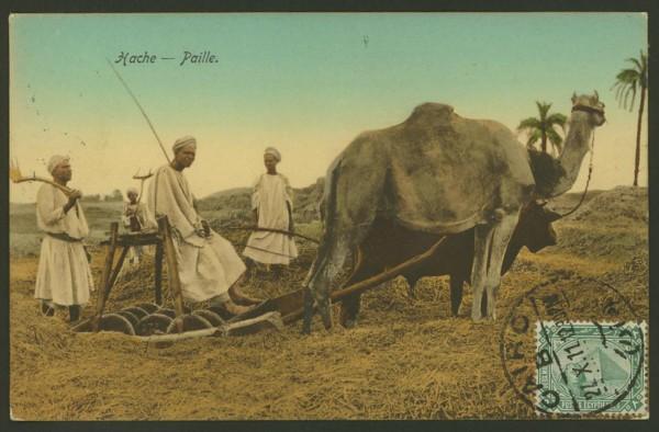 Ägypten   -   Alte Ansichtskarten   /   Menschen bei der Arbeit 04410