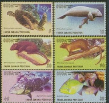Regenwald Cuba1010