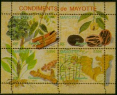 Regenwald Mayott11