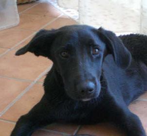 OSCAR,3 días tirado sin auxilio en el arcén(Sevilla) Untitl57