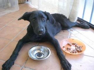 OSCAR,3 días tirado sin auxilio en el arcén(Sevilla) Untitl59
