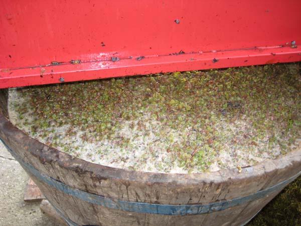 Tehnologija pravljenja vina Muljac11