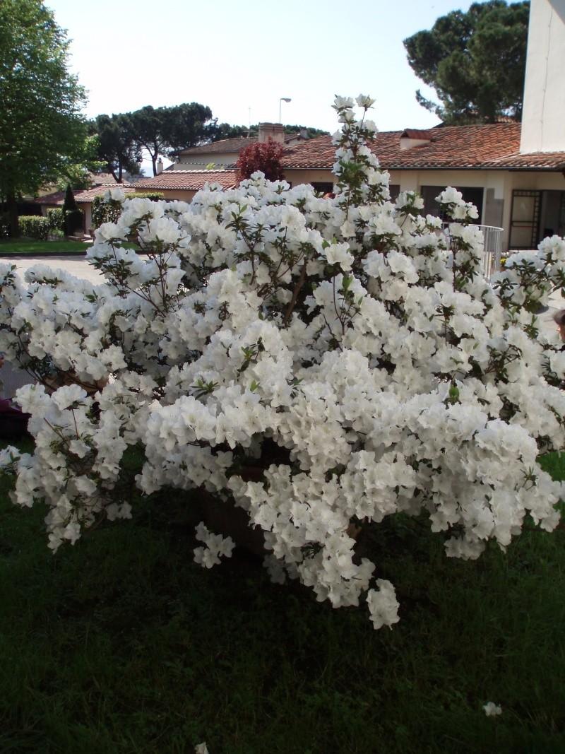 Thème du mois de Mai 'Le renouveau du printemps' Floren10