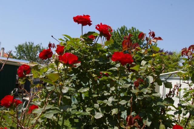 Lisette et ses copinettes découvrent  les fleurs de gigi Imgp2422