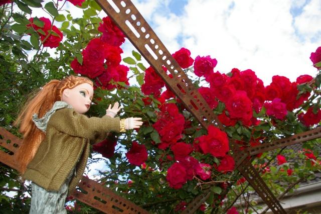 Lisette et ses copinettes découvrent  les fleurs de gigi Imgp2511
