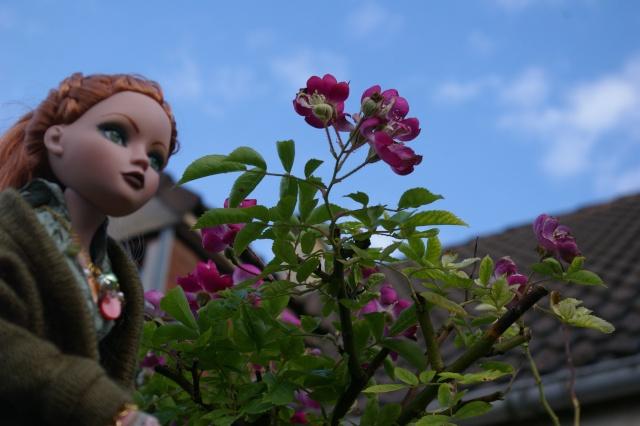 Lisette et ses copinettes découvrent  les fleurs de gigi Imgp2521