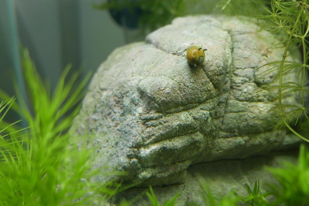 un nano bac de 50 L pour micro-poissons, crevettes escargots 211