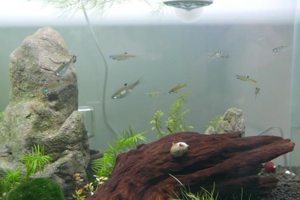 un nano bac de 50 L pour micro-poissons, crevettes escargots 310