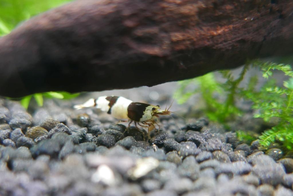 un nano bac de 50 L pour micro-poissons, crevettes escargots 410