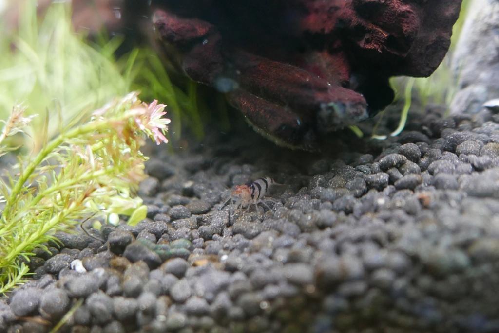 un nano bac de 50 L pour micro-poissons, crevettes escargots P1550410