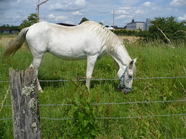 DONA - PRE née en 1987 - accueillie en septembre 2012 chez Pech-Petit Dona_019