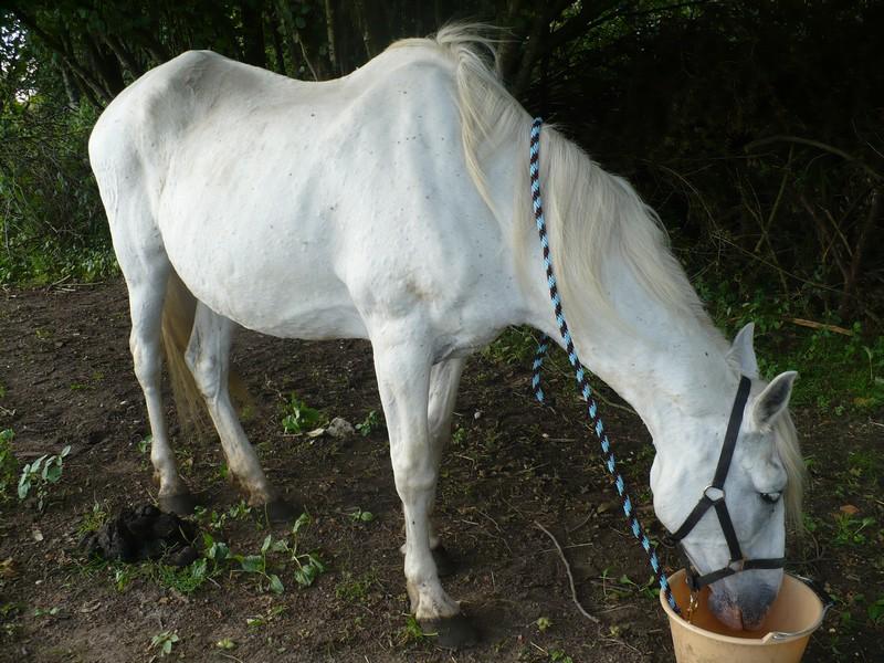 DONA - PRE née en 1987 - accueillie en septembre 2012 chez Pech-Petit Dona_l10