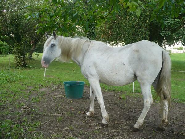 DONA - PRE née en 1987 - accueillie en septembre 2012 chez Pech-Petit Dona_l12