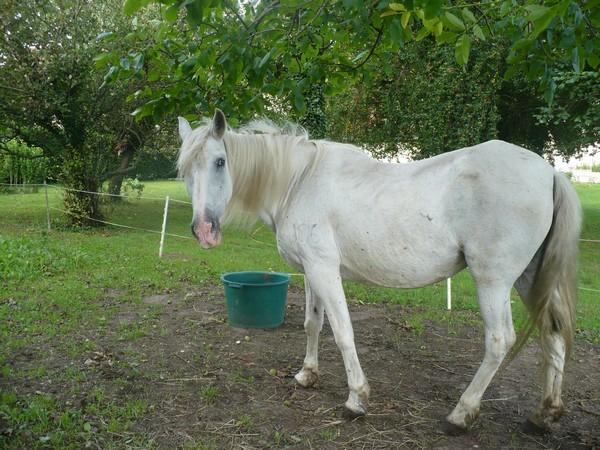 DONA - PRE née en 1987 - accueillie en septembre 2012 chez Pech-Petit Dona_l13