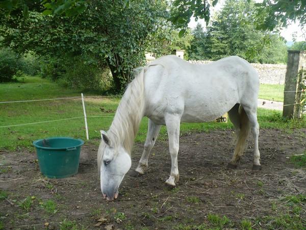 DONA - PRE née en 1987 - accueillie en septembre 2012 chez Pech-Petit Dona_l14