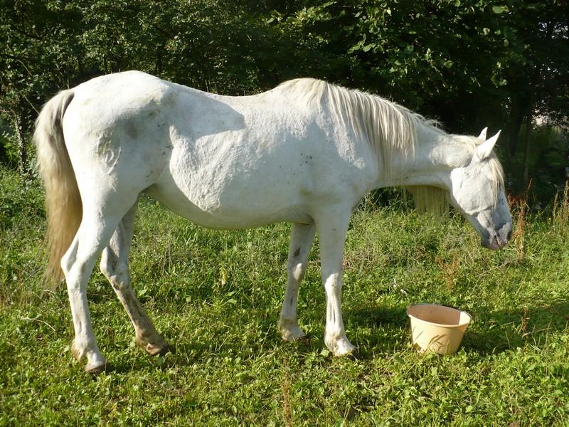 DONA - PRE née en 1987 - accueillie en septembre 2012 chez Pech-Petit - Page 2 Dona_l17