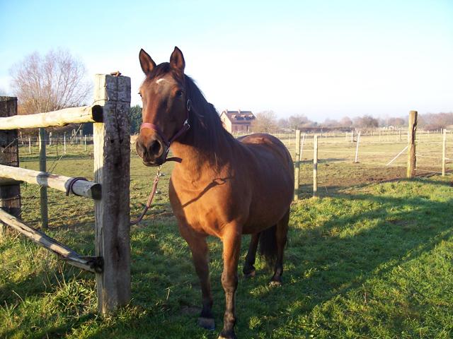 GITANE & CAPUCINE - nées en 1988 - accueillies en mars 2009 chez Pech-Petit  Gitane10