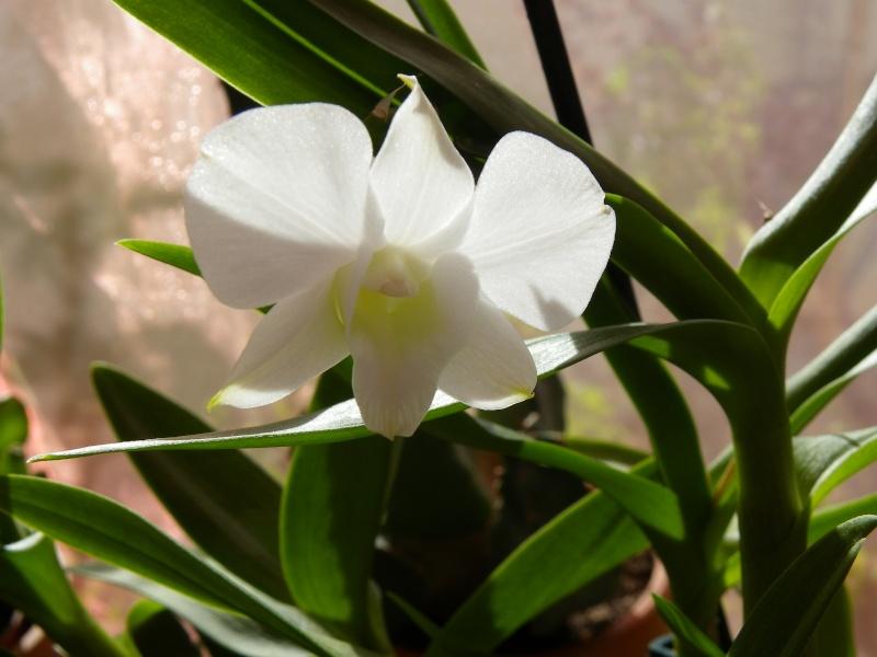 mes orchidées Imgp5424
