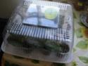 Урок 1. Вегетативное размножение сенполии, листовым черенком. Img_0911