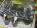 Урок 1. Вегетативное размножение сенполии, листовым черенком. Img_0912