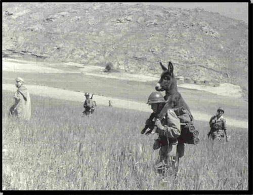 Desembarco de un burro Donkey10