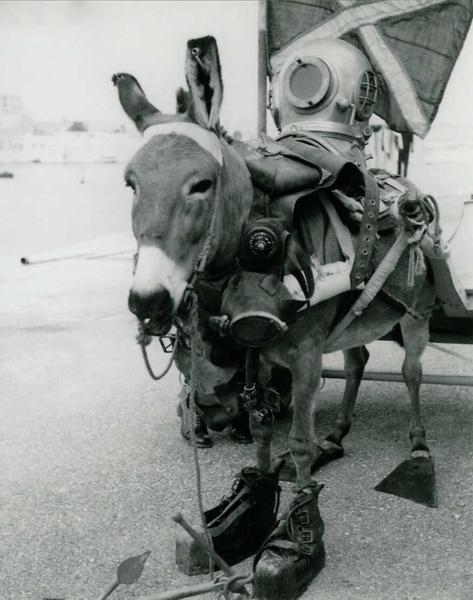 Desembarco de un burro Donkey12